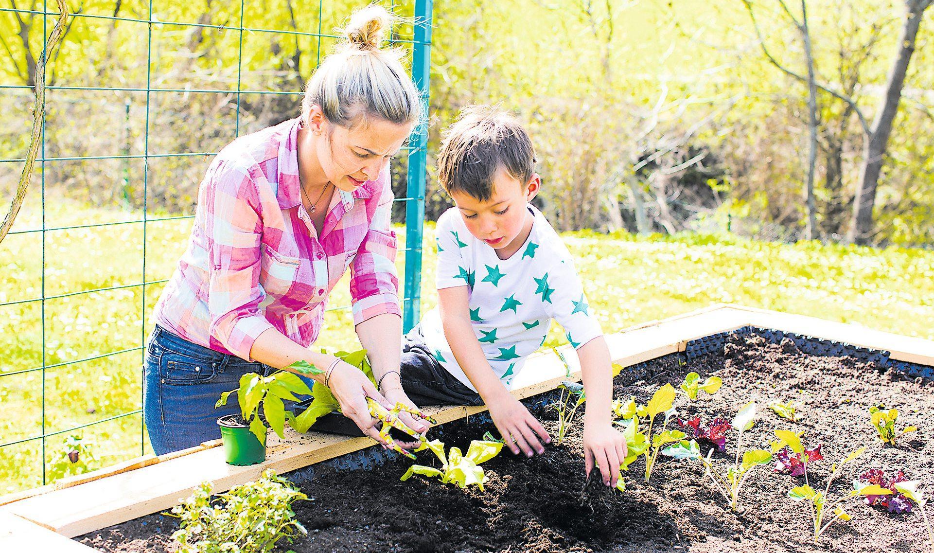 Keiner zu klein, um im Garten oder Hochbeet Gemüse anzupflanzen: Superfood aus Eigenproduktion. Bild: Adobe Stock