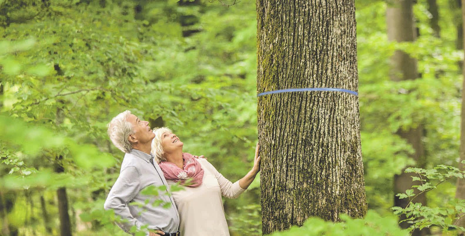 Schon zu Lebzeiten kann in einem Bestattungswald der Baum ausgewählt werden, der die letzte Ruhestätte werden soll.       Foto: djd/FriedWald