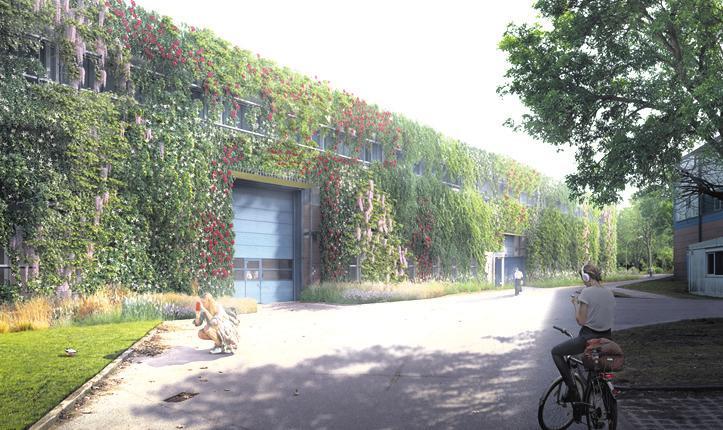 Visualisierung: So soll die DESY-Halle 36 in einigen Jahren aussehen Foto: BUKEA, L+ Landschaftsarchitekten, Iuminuousfields