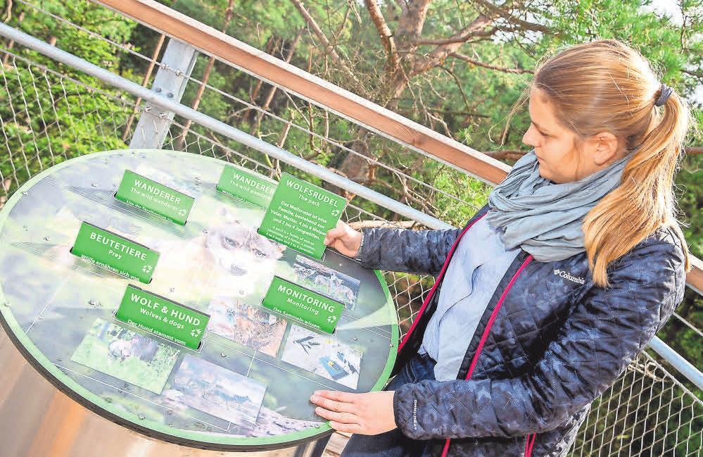 Der Baumwipfelpfad bietet viele Informationen über die heimische Natur und ihre Tierarten.