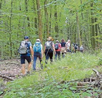 Die Wälder und ihre Schönheit können Wanderfreunde bei zwei geführte Wandertouren rund um Völklingen kennenlernen. Foto: Martin Bambach
