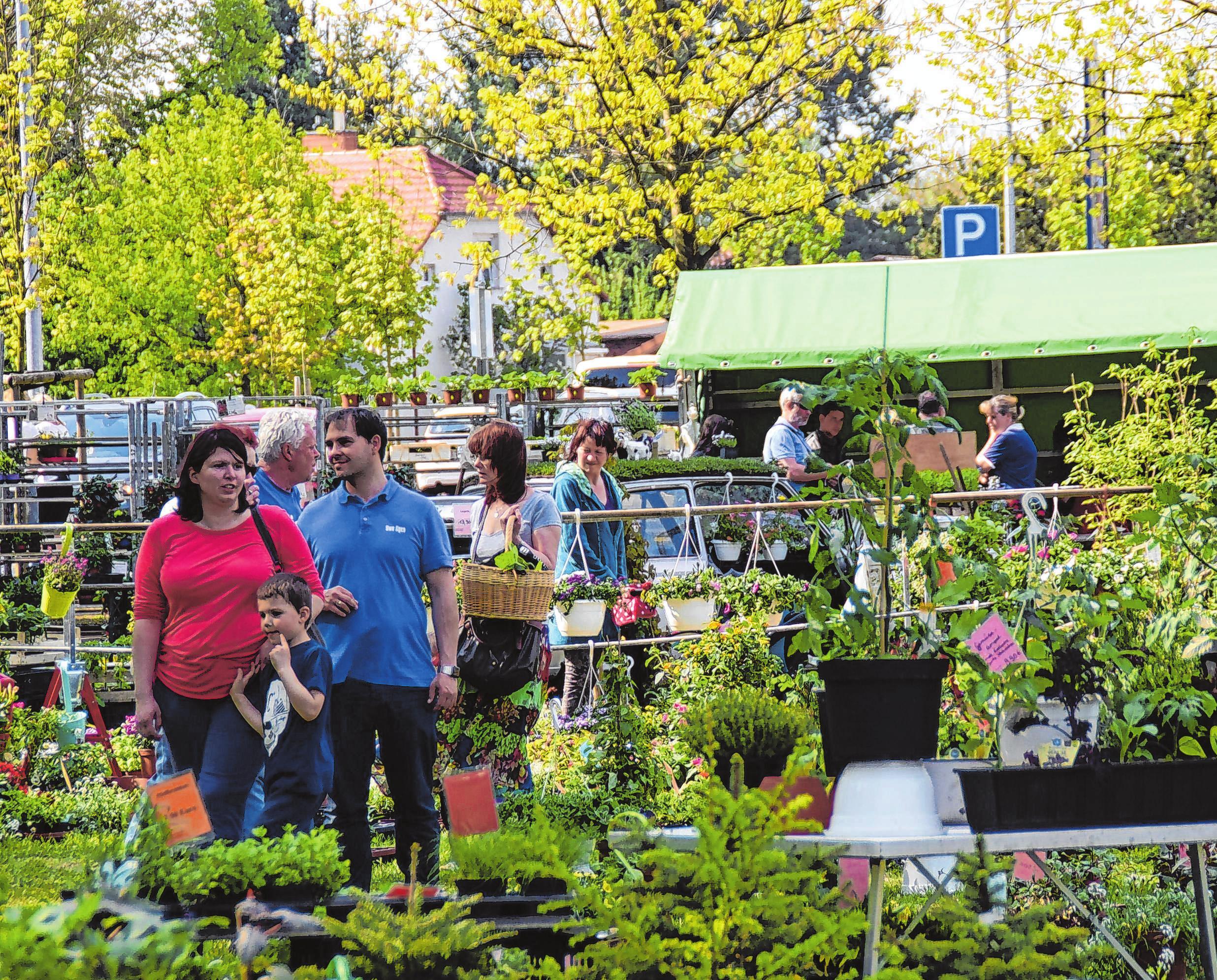 Der Blumen-, Pflanzen- und Gehölzemarkt zieht immer viele Gartenfreunde an. Foto: Archiv