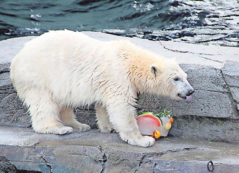 Nana probiert die Eistorte im Erlebnis-Zoo Hannover.