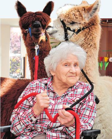 Irmgard Emmel freut sich über die flauschig-weichen, gutmütigen Besucher Foto: Residenz am Wiesenkamp