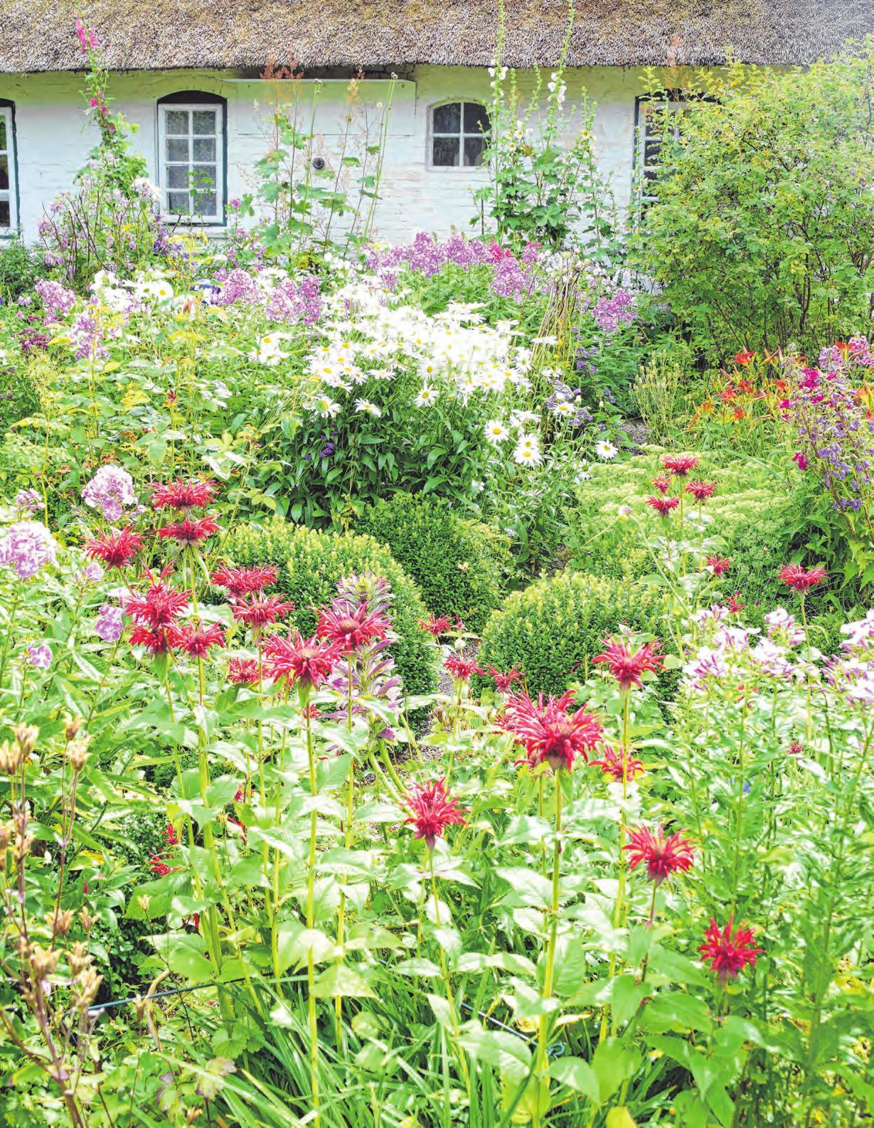 Wo viele verschiedene Pflanzen blühen, finden Insekten Nahrung. Dann summt und brummt es im Garten. Foto: Sulzberger/BLV, © hydebrink – stock.adobe.com