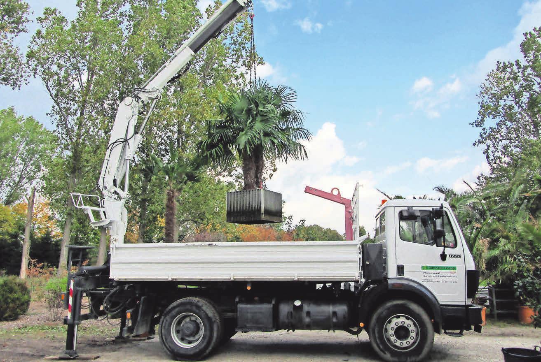 Mit schwerem Gerät werden große Kübelpflanzen ins Winterquartier gebracht.