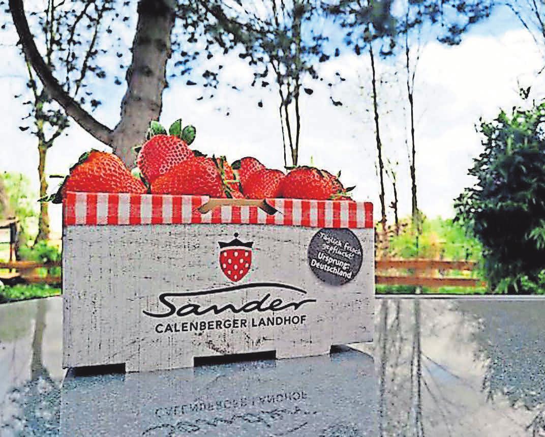Lecker, lecker: Sander-Erdbeeren gibt es jetzt überall frisch zu kaufen – und jeder kann sie auch selbst pflücken.