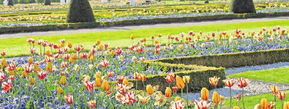 Blütenpracht im Großen Garten. Foto: Schulze