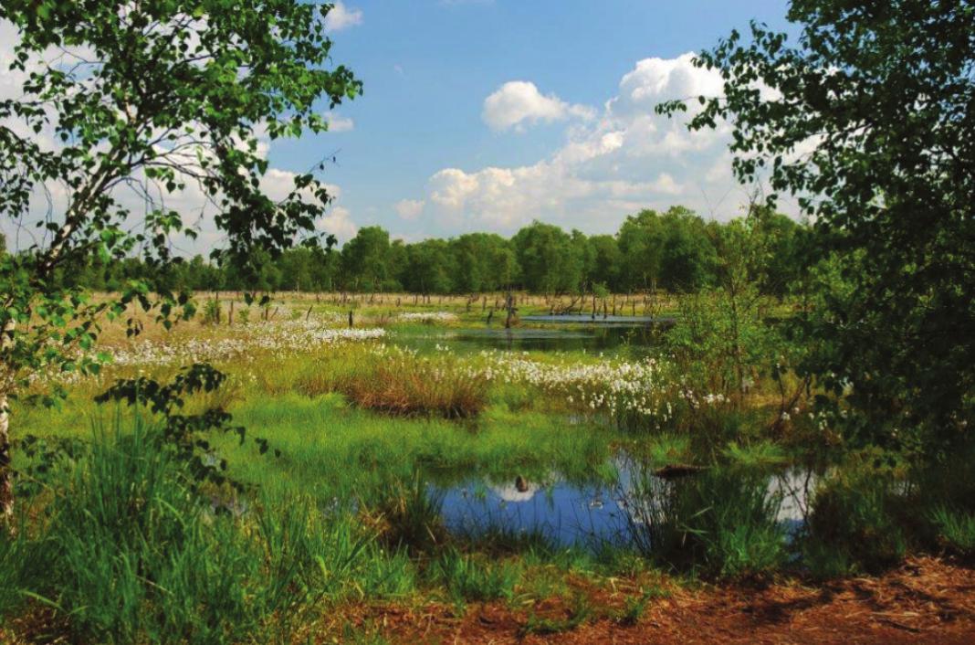 Halb Dorf, halb Vorstadt: Am Wittmoorsee in Lemsahl-Mellingstedt kann man zur Ruhe kommen und die Seele baumeln lassen Foto: HansWolters