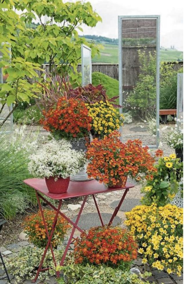 """Balkonpflanze des Jahres ist die Bidens Goldmarie """"Funny Honey"""". Leuchtend orange blüht sie unermüdlich. Bild: Kientzler"""