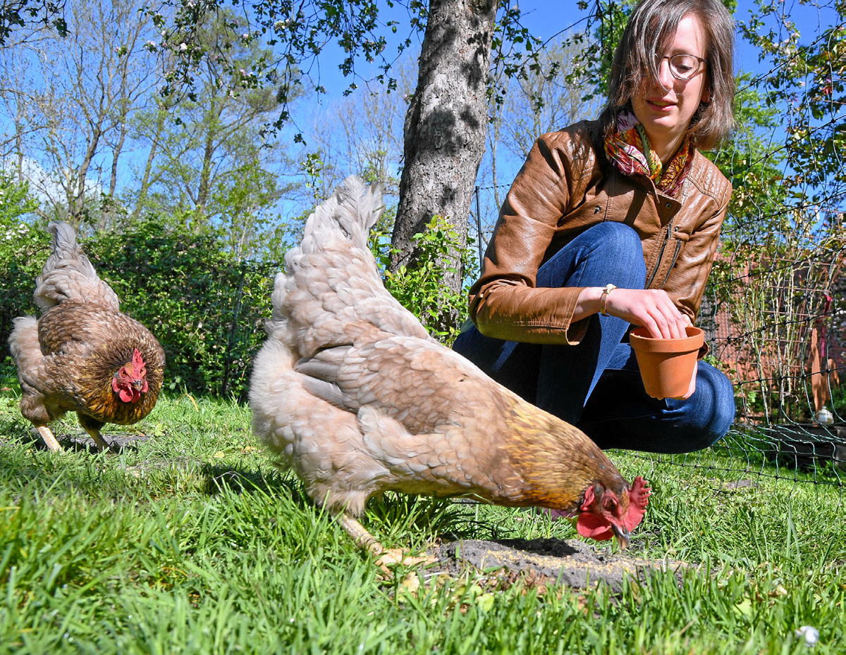 Aufs Huhn gekommen Image 2
