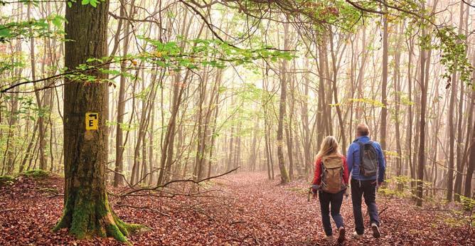 Egal ob Kurztour oder Rundwanderung – jeder kommt auf seine Kosten. Foto: Donnersberg-Touristik-Verband e.V. / Florian Trykowski