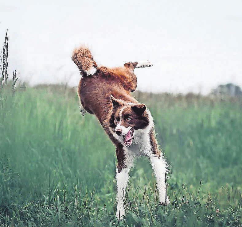 Beim Hundesport haben Zwei- und Vierbeiner Spaß. Foto: Pixabay