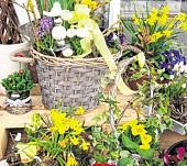 In der Gärtnerei ist alles auf den Frühling eingestimmt. FOTO: DANIELA DÖRFEL