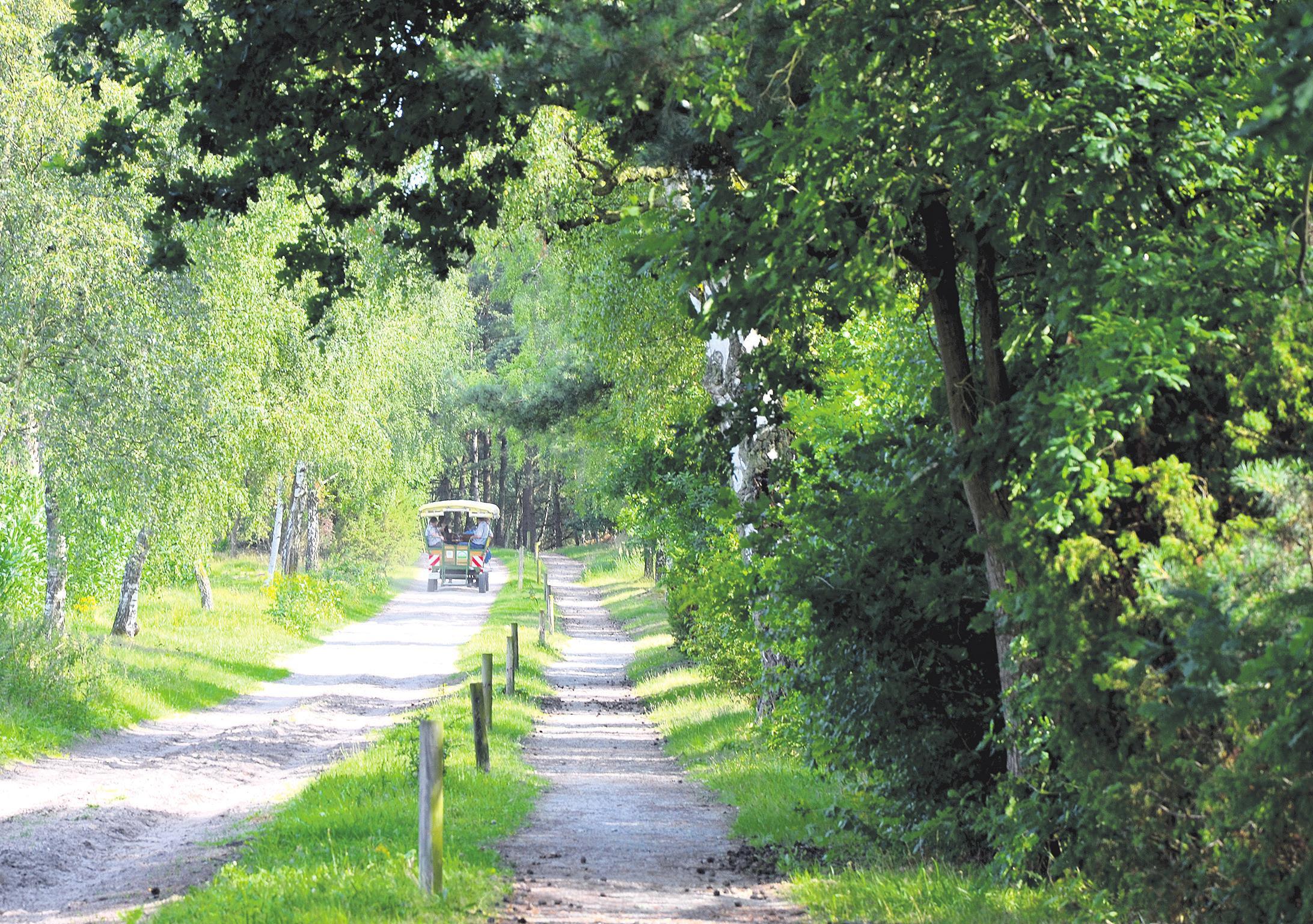 """Eine Empfehlung des Umweltausschusses zur Ausweisung des Naturschutzgebietes """"Heiden und Magerrasen in der Südheide"""" wurde auf kommenden Freitag vertagt. Foto: Alexiou"""