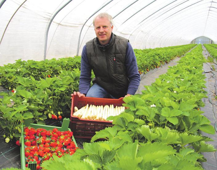 Bastian Soltau präsentiert frisch gestochenen Spargel und leckere süße Erdbeeren auf dem Hof Soltau Foto: Frauke Pöhlsen