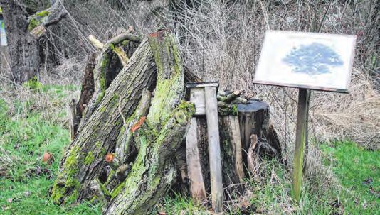 Dekoration und Lebensraum: ein Totholzhaufen Fotos (6): Marlis Tautz