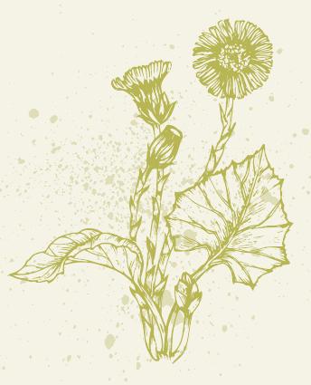 Frühjahrs-Wildkräuter im Porträt Image 6