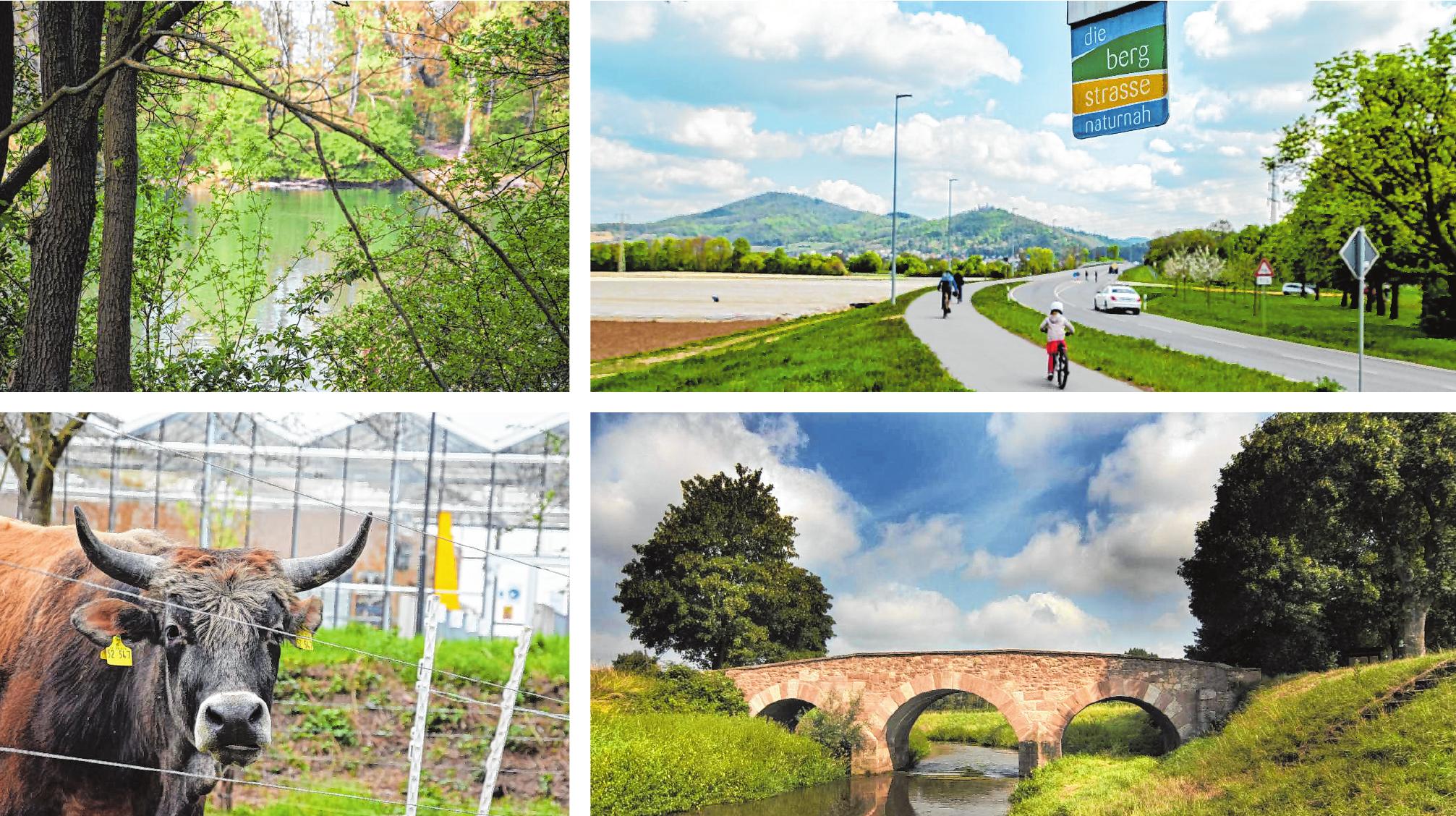 """Erlensee, Lauresham und Wattenheimer Brücke werden auf dem Radweg """"Bergstraße naturnah"""" passiert. Bilder: Thomas Tritsch, Thomas Neu"""
