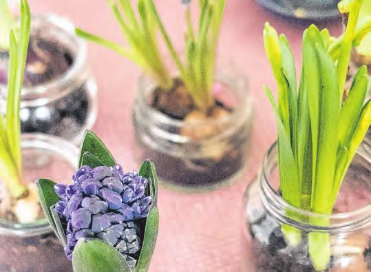 So kommt der Frühling in die Stube Image 2