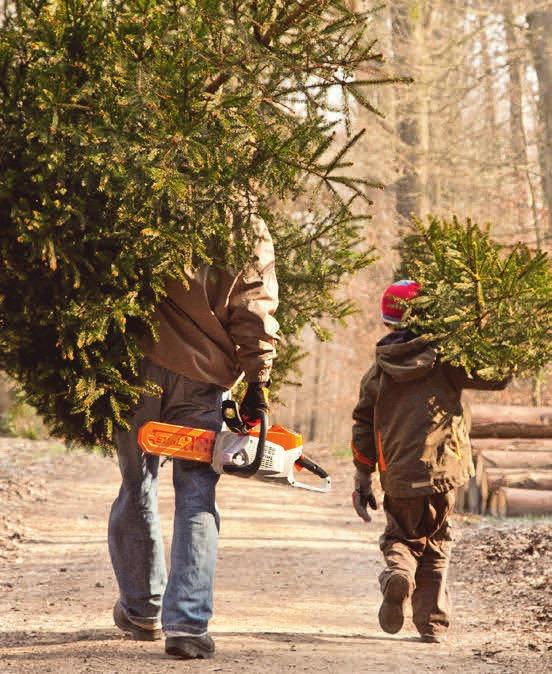 Der Trend geht zum Zweitbaum: Fast 30 Millionen Tannenbäume schmücken zu Weihnachten die deutschen Stuben.