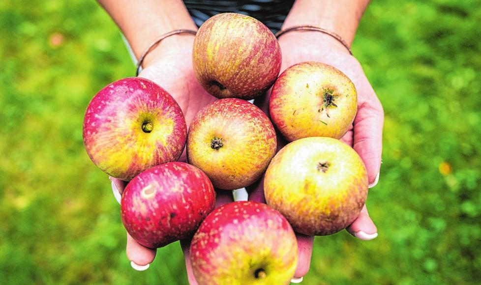 Egal ob Äpfel, Kartoffeln, Eier oder Honig: Vielerorts gibt es die Produkte, die von den Landwirten vor Ort produziert werden auch in den Supermärkten und Discountern zu kaufen. Foto: dpa