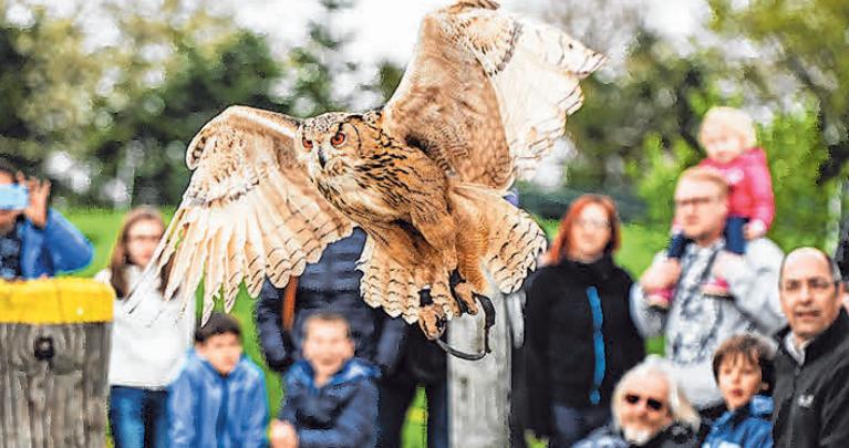 Die spektakuläre Greifvogel-Vorführung lässt Besucher staunen.