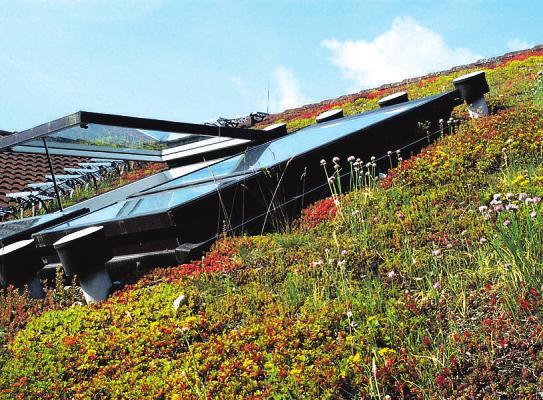 Selbst Steildächer bis zu einer Neigung von 45 Grad können extensiv begrünt werden Foto: BGL