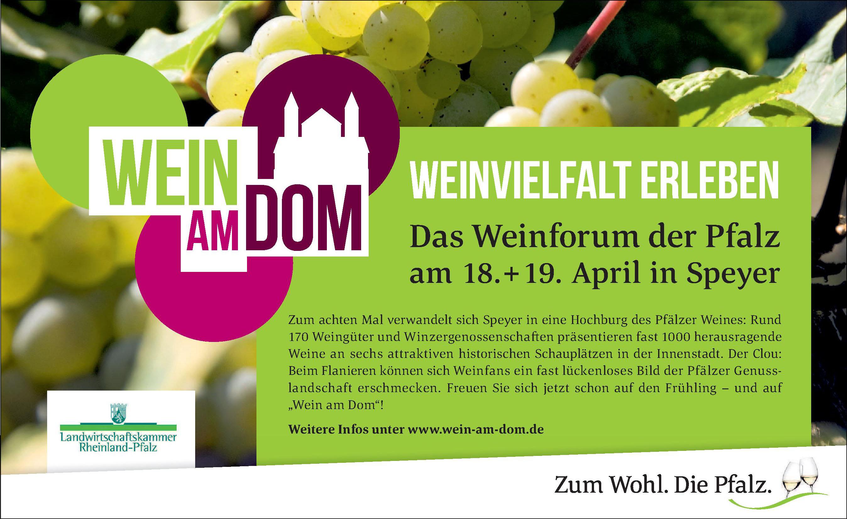 Wein am Dom