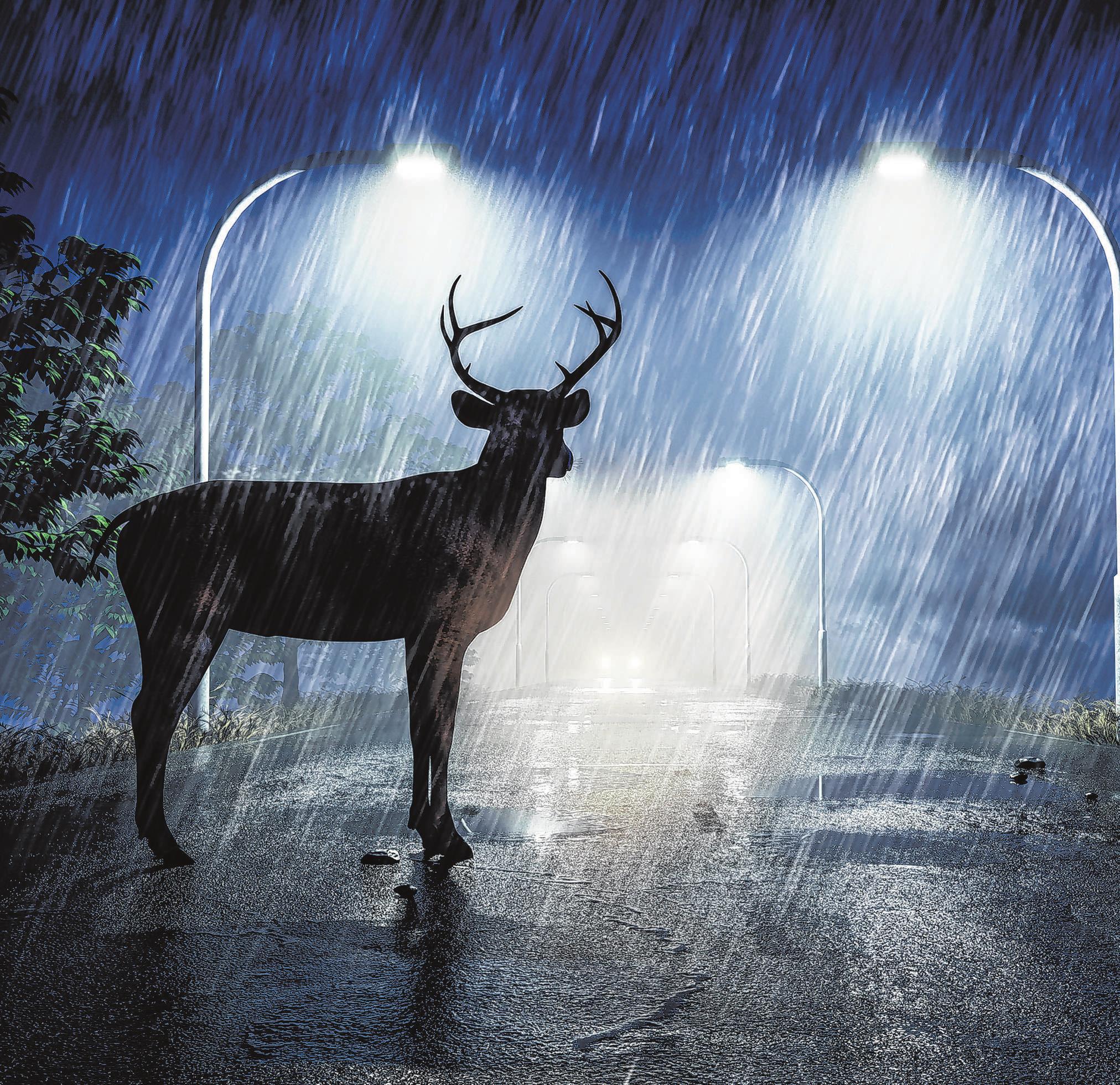 Bei schlechtem Wetter und in der Dämmerung ist die Gefahr durch Wildwechsel im Straßenverkehr besonders groß. Foto: mediaparts/fotolia/itzehoer
