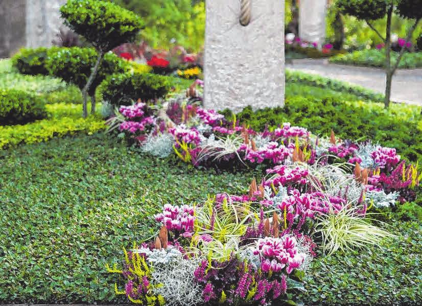 Das Alpenveilchen ist aufgrund seiner Farbenvielfalt auch sehr gut mit anderen Pflanzen kombinierbar. FOTO: DJD/GESELLSCHAFT DEUTSCHER FRIEDHOFSGÄRTNER/MARGIT WILD