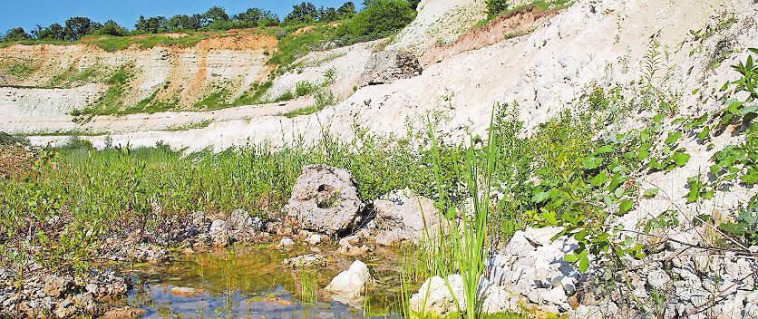 Paradies für einige seltene Tier- und Pflanzenarten:Wasserstellen im ehemaligen Tagebauloch. Archivfoto: Donnersberg-Touristikverband/frei