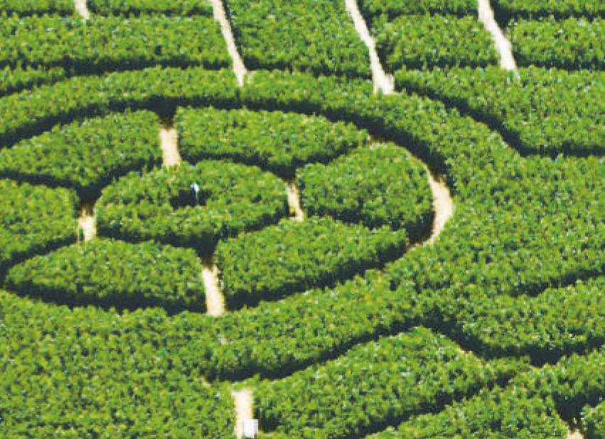Das Labyrinth bietet Kindern, Jugendlichen und Erwachsenen reichlich Spannung und Aktion. Bild: Hegehof