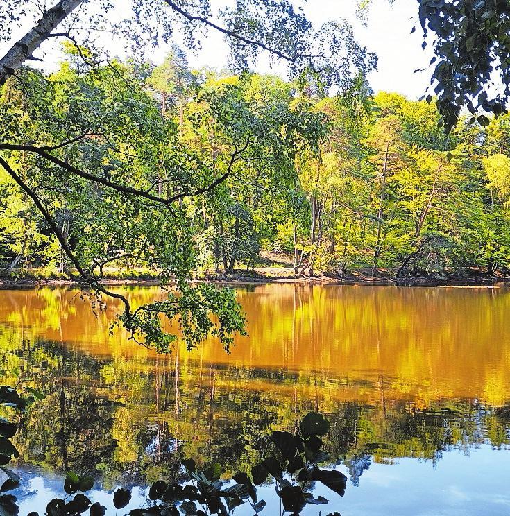 In Herbstfarben getaucht: Retzbergweiher. Foto: Markus Huwig
