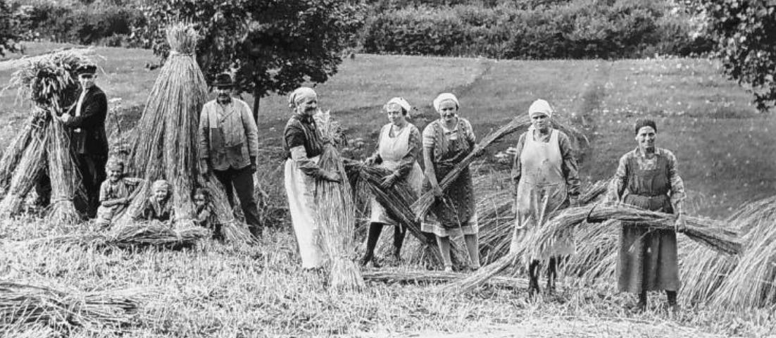 Kornernte in Rinsdorf im Jahr 1930. Beim Festwochende stehen Geschichten aus der Vergangenheit der Ortschaft im Fokus.