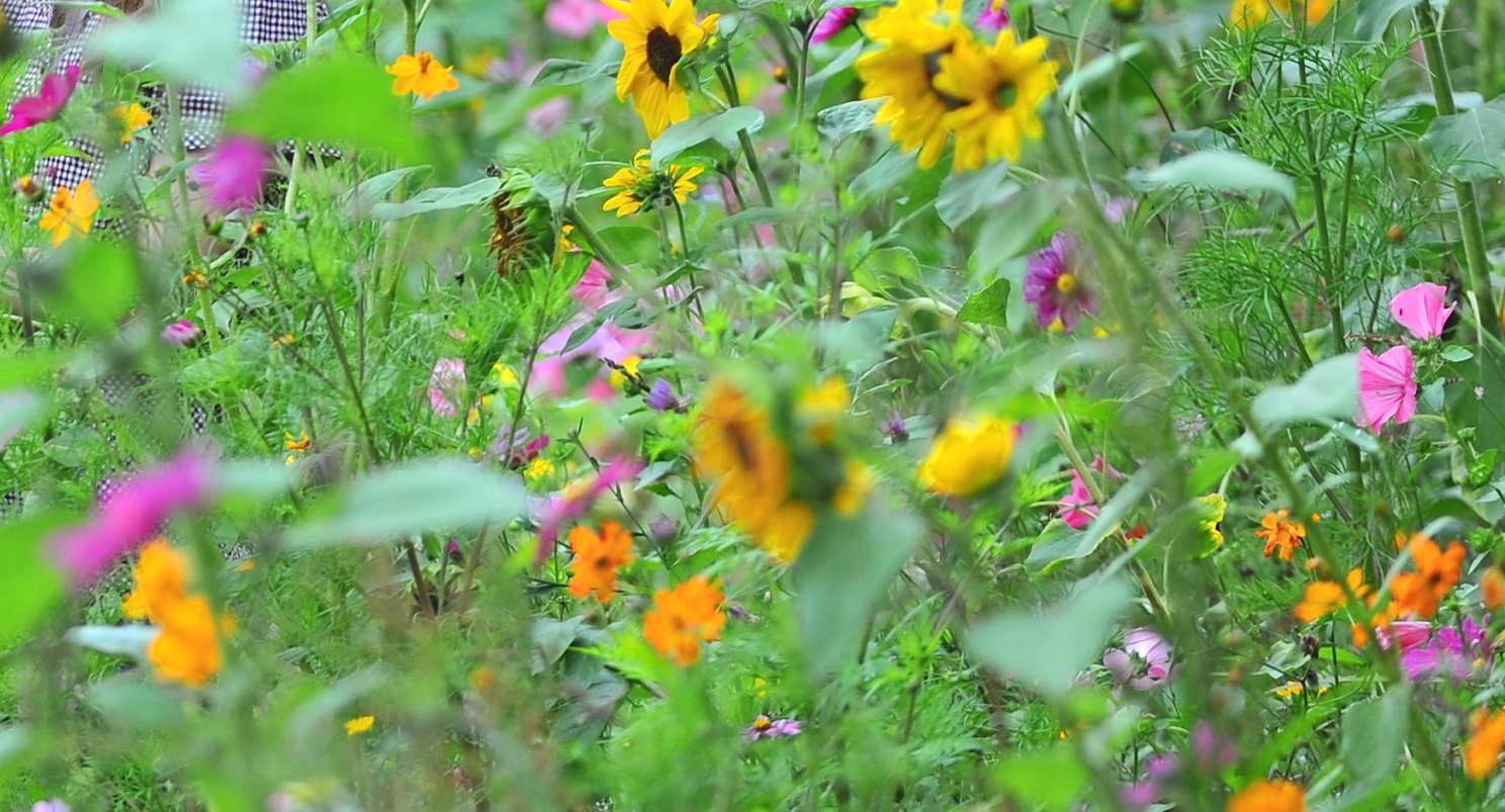 Weg vom englischen Rasen, hin zur Wildblumenwiese: Sie ist nicht nur eine Augenweide, sie bietet Kleintieren einen wichtigen Lebensraum und ist obendrein noch pflegeleicht. Foto: dpa