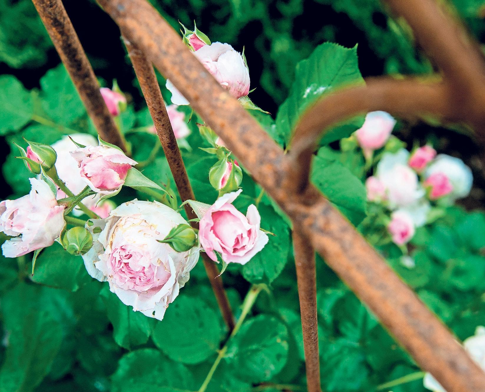 Blumen allein zu Hause Image 1