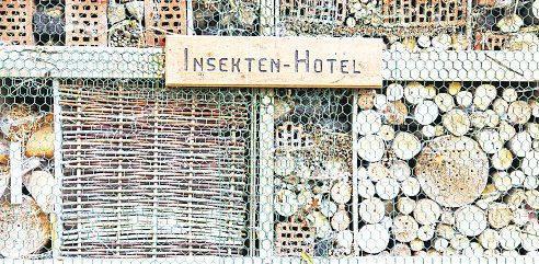 Wer Insekten ein gutes Zuhause bietet, kann mit ihrer Hilfe bei der Schädlingsbekömpfung rechnen. Foto: Gabriele Rohde - stock.adobe.com