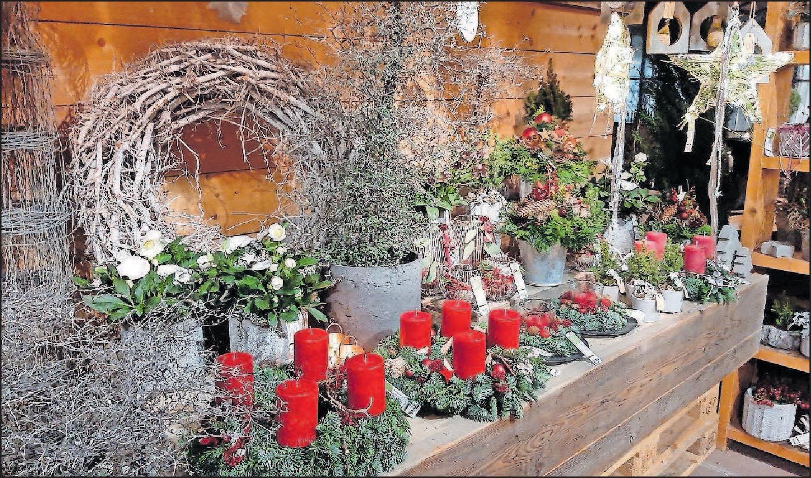 Rote Kerzen gehören für viele obligatorisch auf den Adventskranz:Weitere Impressionen und florale Ideen für die Vorweihnachtszeit gibt es in Rheingönheim auch bei Blumen Schönmann. FOTO: SCHAAR