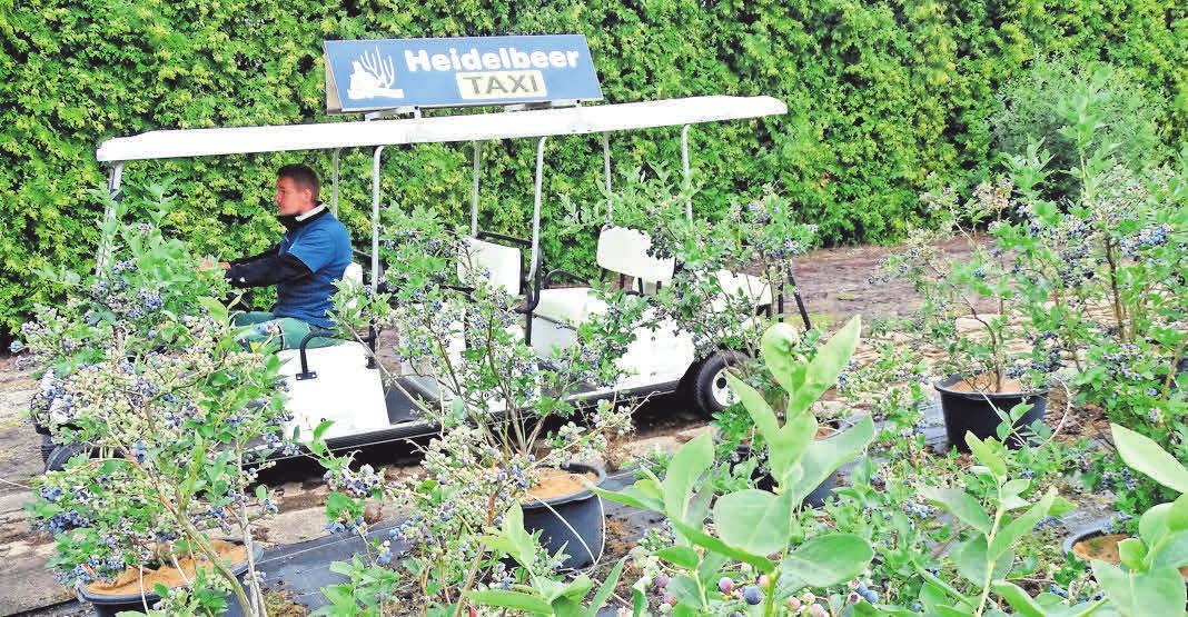 Mit dem Heidelbeer-Taxi bringt Christian Wassermann die Selbstpflücker zu den besten Stellen.