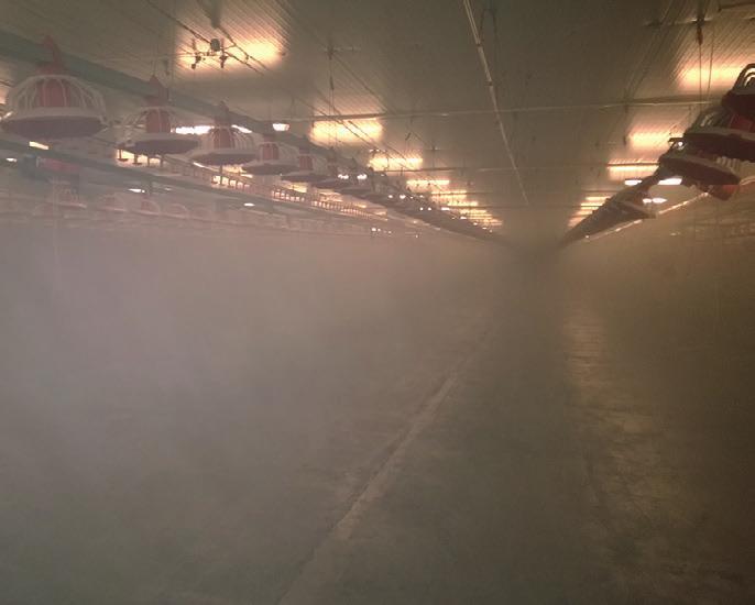 Optimale Nebelverteilung im ganzen Stall. Selbst schwer zugängliche Bereiche werden durch den Nebel erreicht. Fotos: IGEBA