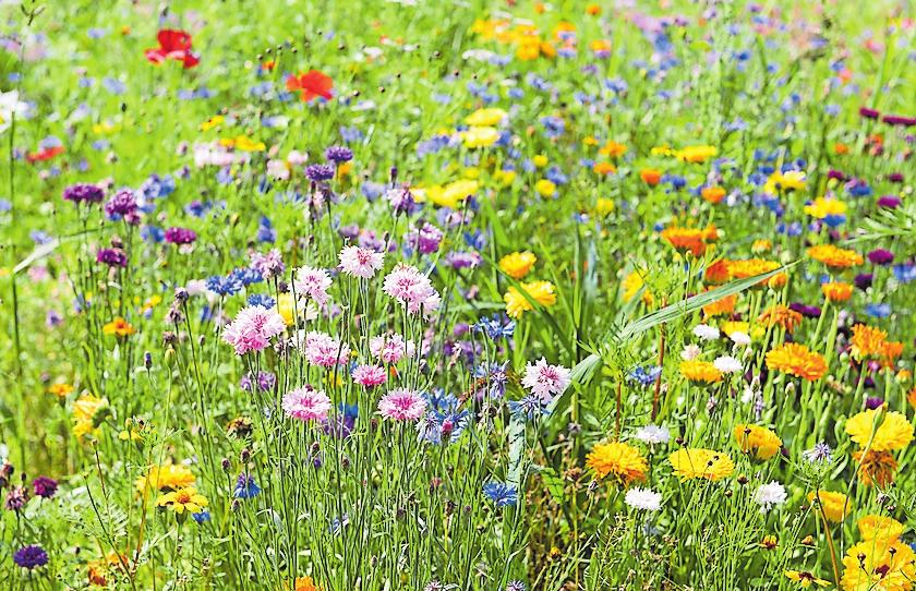 Für mehr Insektenvielfalt