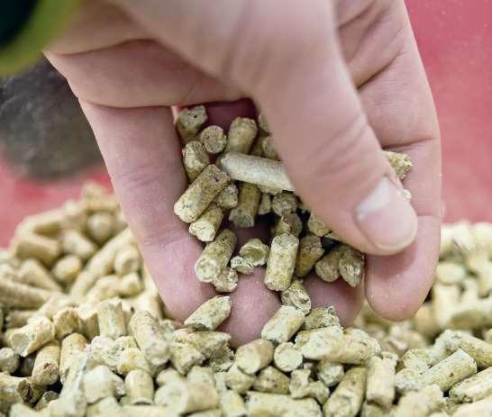 Aus getrocknetem, naturbelassenem Restholz werden ohne Zugabe von chemischen Bindemitteln, dafür aber unter hohem Druck die kleinen Pellets gepresst. Foto: Inga Kjer
