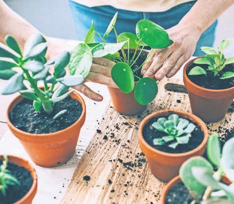 Bei Zier- und Balkonpflanzen lohnt es sich, auf Label für ökologischen Anbau zu achten. Foto: iStockphoto.com/MmeEmil