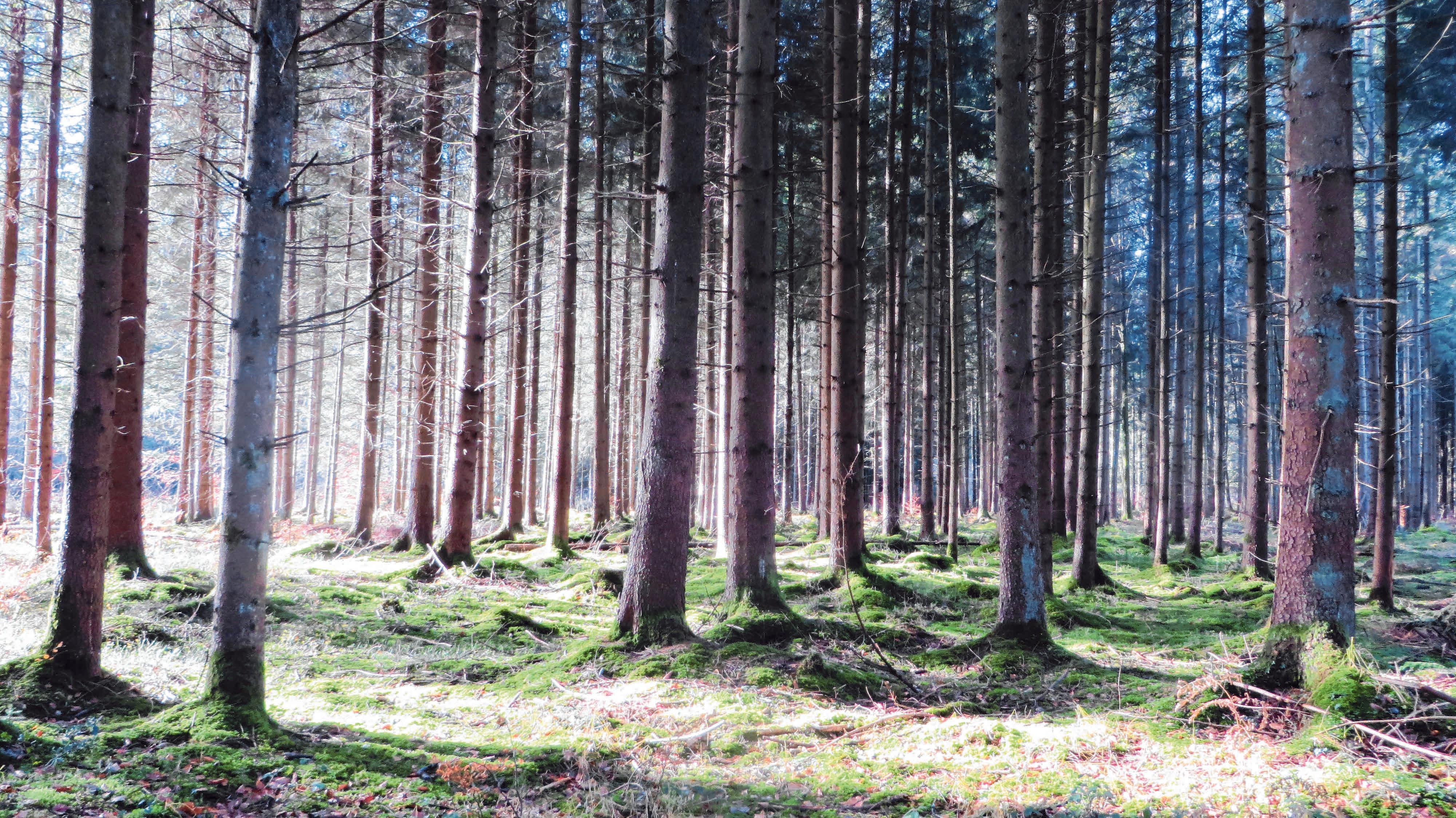 Die Waldarbeit der Zukunft ist eine große Herausforderung. Gefragt sind daher Spezialisten wie Hansjörg und Emanuel Gruber mit ihren Partnern. Fotos: Forstbetrieb Gruber
