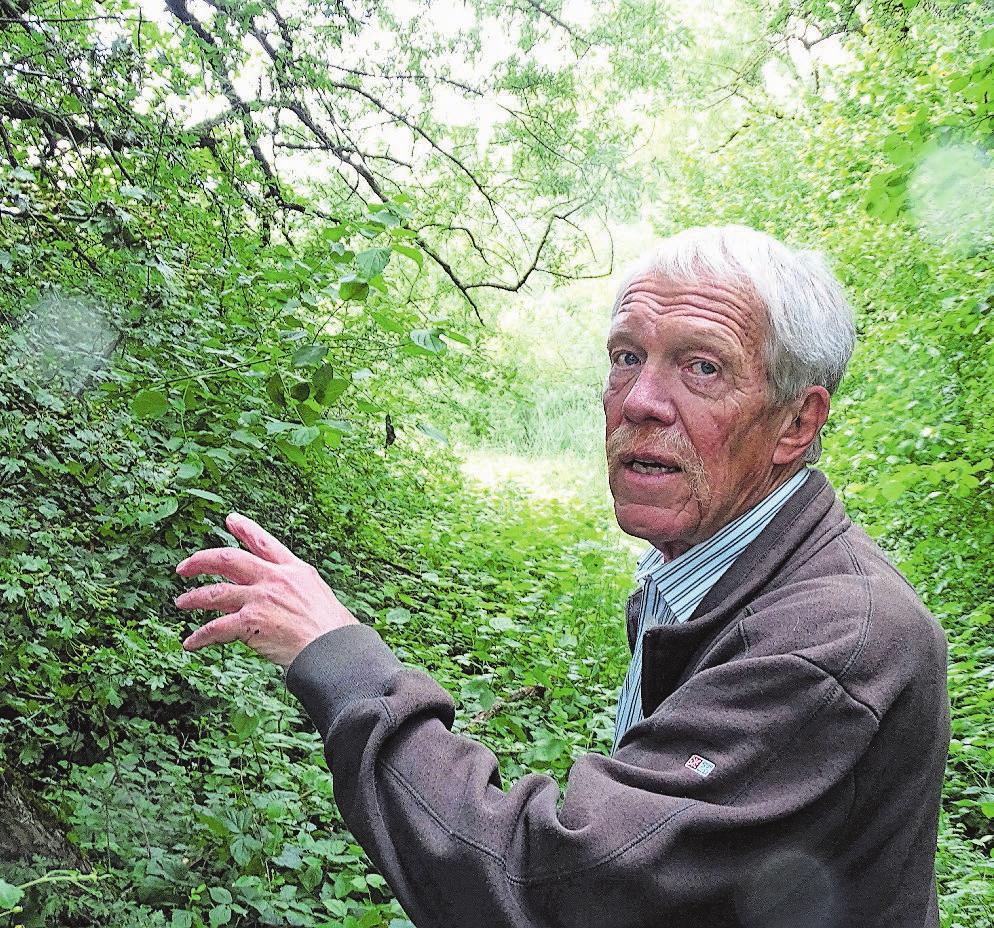 Viktor Stüdeli weiss jede Menge über Flora und Faune der Witi. Bild: D.S.
