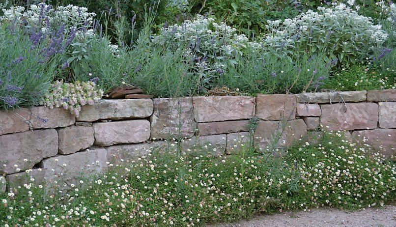 Lavendel, Perlkörbchen und der extravagante Hopfen-Dost krönen die elegante Sandsteinmauer. Am Fuß schmückt sie eine Bordüre aus Spanischen Gänseblümchen. Bild:GMH/Anne Eskuche
