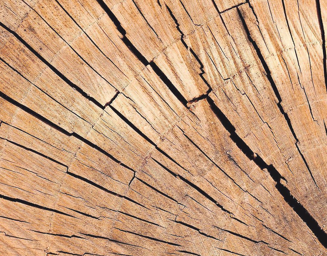 Holzprodukte sind Spitzenreiter unter den Naturdämmstoffen
