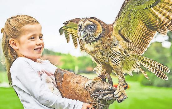 Bei der neuen Flugshow können die Kids auch große Greifvögel hautnah erleben.