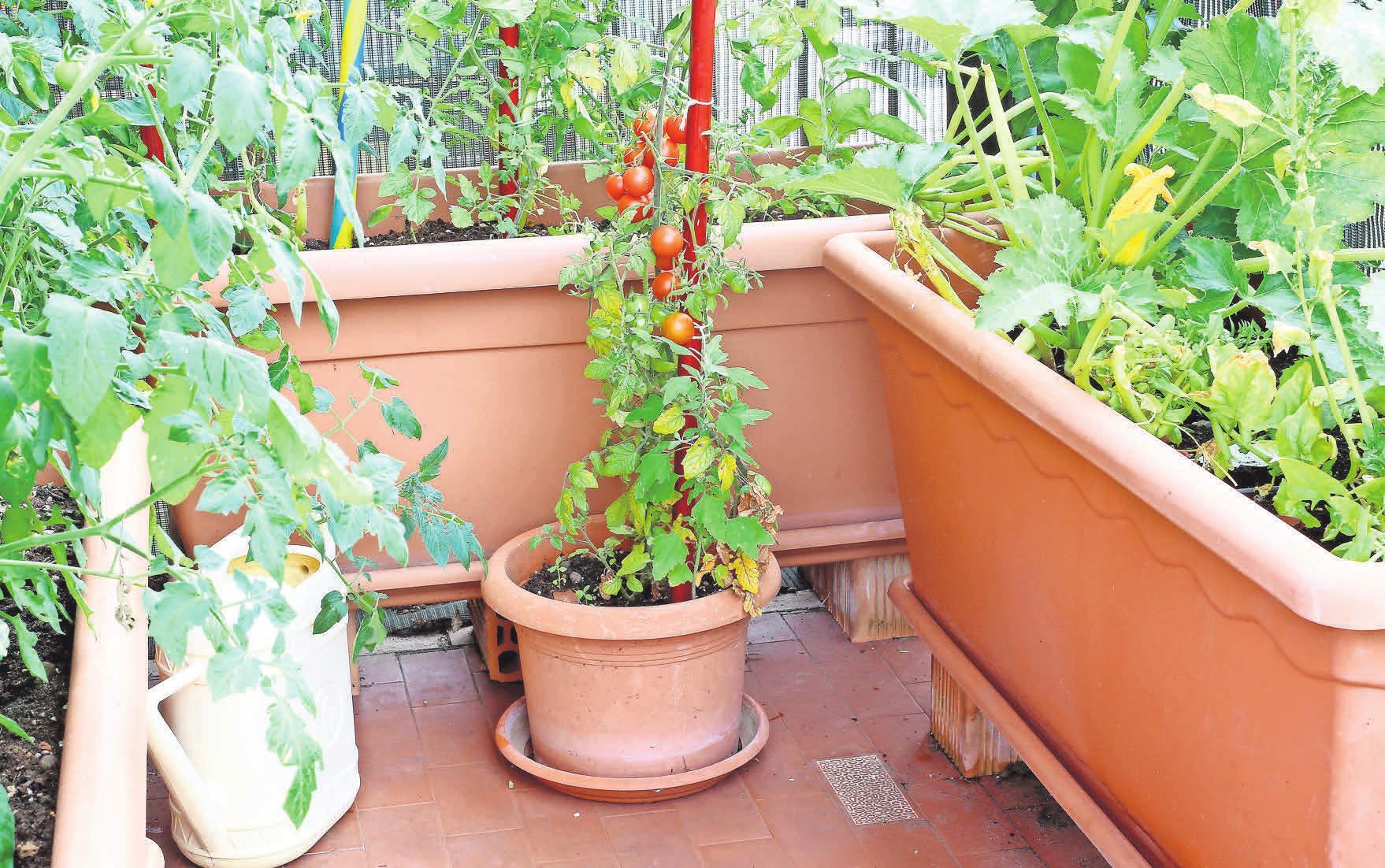FARBENFROH: Auf einem Balkon lassen sich viele verschiedene Gemüsesorten anpflanzen. istockphoto.com/ChiccoDodiFC